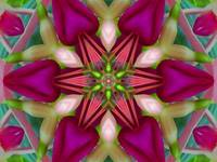 Fun Fuschia Flower Mandala 1