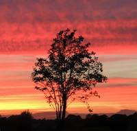 Rowan Tree Sunset