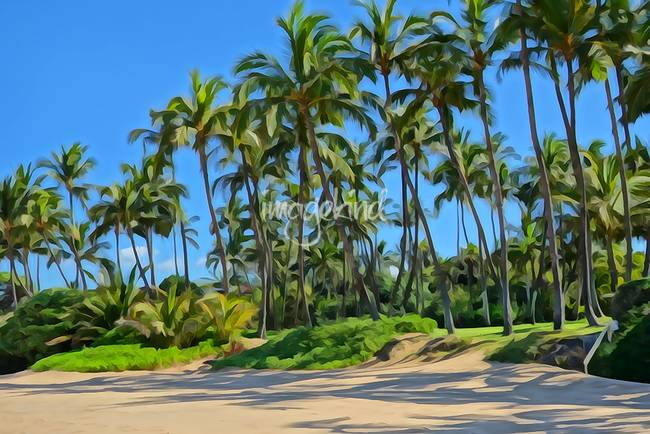 Shady Coconut Palms