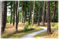 Dutch Path by Carol Groenen