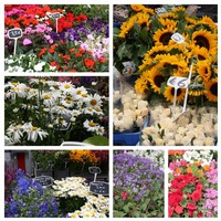 European Market Flowers