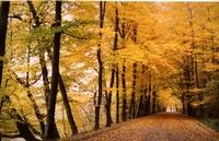 Belgian Forest Road by Carol Groenen