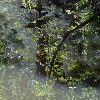 Blackstone Valley Canal Reflection I