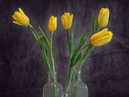 Five Yellow Tulips