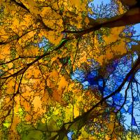 """""""Autumnal Splendor during the Fall Season"""" by New-Yorkled"""