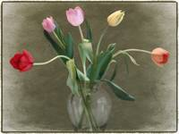 Tulip Collective by Giorgetta Bell McRee
