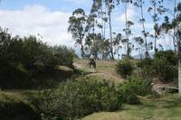 Riding Through an Ecuadorian Pasture