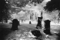 Melrose Abbey, Roxburghshire (b/w photo)