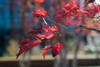Image ID# Whalen-101013-5011 - Fall Colors One.jpg
