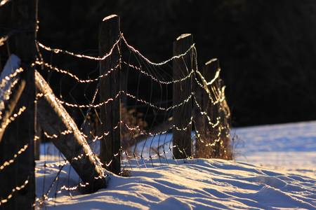 120205_icy_fence_01 by Andrei Filippov