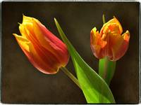 Tulip Twins by Giorgetta Bell McRee