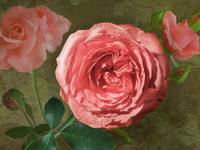 Damask Rose by Giorgetta Bell McRee