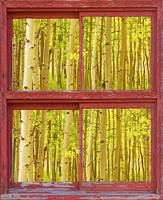 Autumn Aspens Red Picture Window Frame Photos Fine