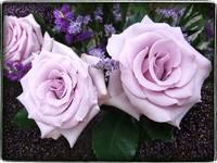 Purple Trio by Giorgetta Bell McRee