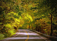 Autumn Road by Carol Groenen