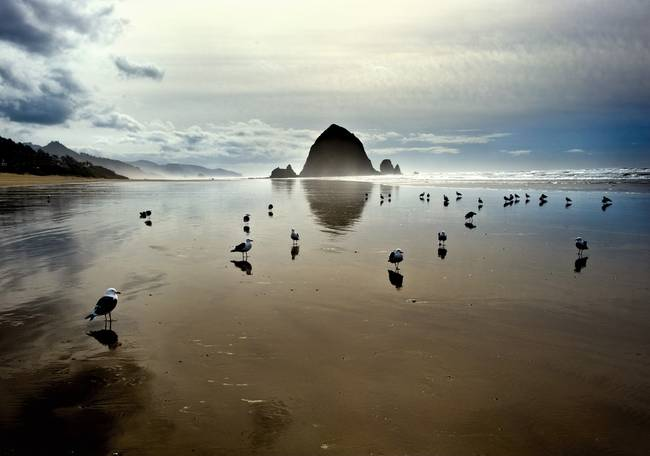 cannon beach and birds