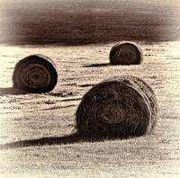 Haybales in the Field