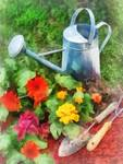 Zinnias and Watering Can