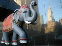 Urban Safari: Elephant
