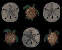 Sand dollars and Turtles