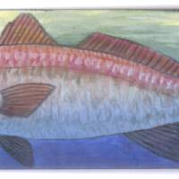 Redfish Art Prints & Posters by Edward Walsh