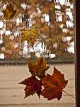 Autumn Window Leaves