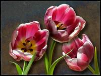 Three Red Tulips by Giorgetta Bell McRee