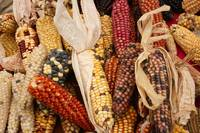 Cobs of Many Colors