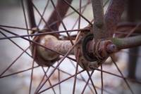 Rusted Bicycle Tire