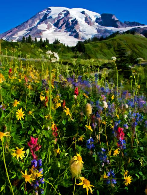 Mt. Rainier wildflowers 2012