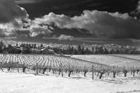 Lava Cap Winery in Winter