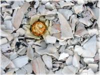 Bottle Cap Among the Shells by Giorgetta Bell McRee