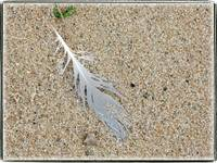 Gull Feather by Giorgetta Bell McRee