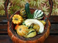 Autumn Gourds by Giorgetta Bell McRee