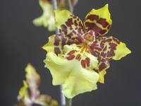 Orchids Collection 05