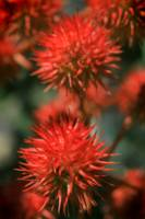 Amazing Red Pod Cluster