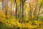 Autumn Western NC Fall Foliage - Forest for the Tr