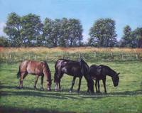 three horses in field