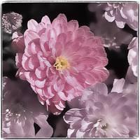 Daisy Mum Romance by Giorgetta Bell McRee