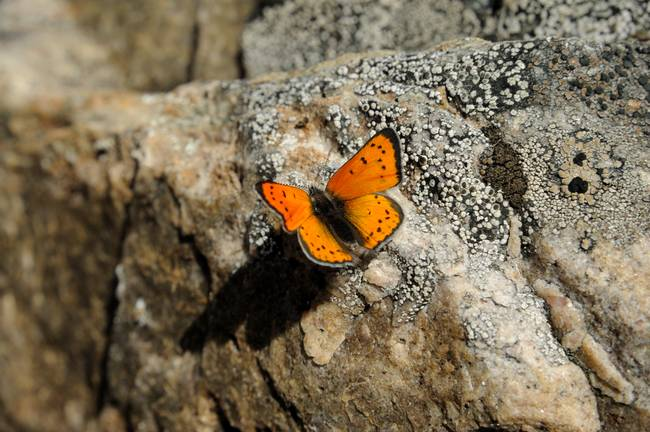 Butterfly on he rock