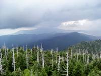 Smoky Mountains - trees foreground-Tennessee
