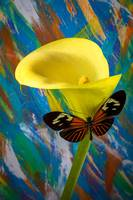Butterfly with single yellow calla lily