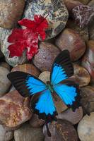 Red leaf and blue butterfly