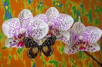Orchids with speckled butterfly