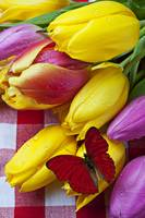 Fresh Tulips and Red Butterfly