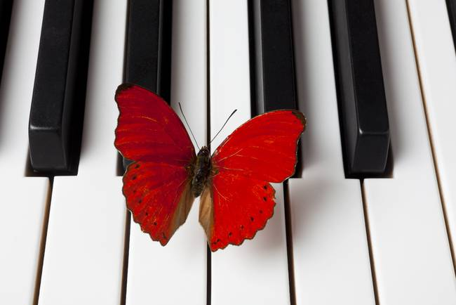 Red Butterfly On Piano Keys