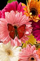 Red butterfly on bunch of flowers
