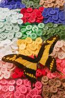 Butterfly and buttons