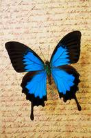 Blue butterfly on old letter