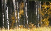 Aspen Reflections on Casper Mountain
